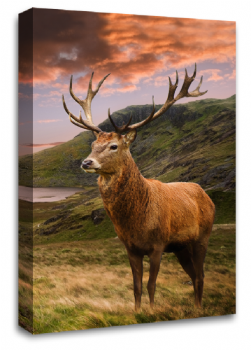 Scottish Highland Stag Wall Art Picture Teal Black Grey White Animal Deer Canvas Print 20 x 30""